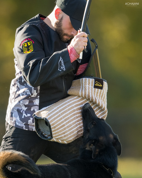Don Yelle & Jekyll vom Rebel Yelle, IPO3. 11/3/2018 USCA GSD National IPO Championship. Pittsburgh, PA. Brian Aghajani Photography