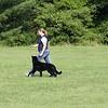 BH - Heeling on leash