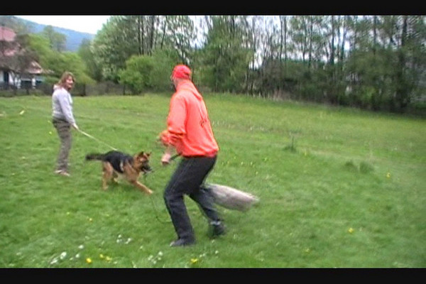 Quando z Folinku bitework at 9 months old<br /> I took the dog our of his kennel to check him out. He did not know me or Don.