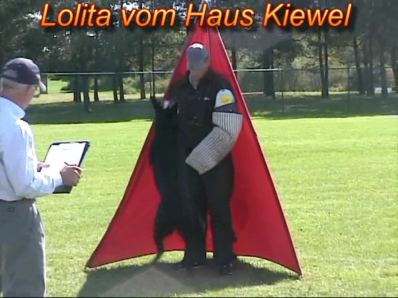 Lolita vom Haus Kiewel, protection @ 2010 New England Regoinals, 90 points