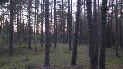 chicken hill woods Elk scene