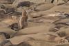 Sun Salutation - Elephant Seal