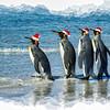 Christmas Greeting - King Penguin Style