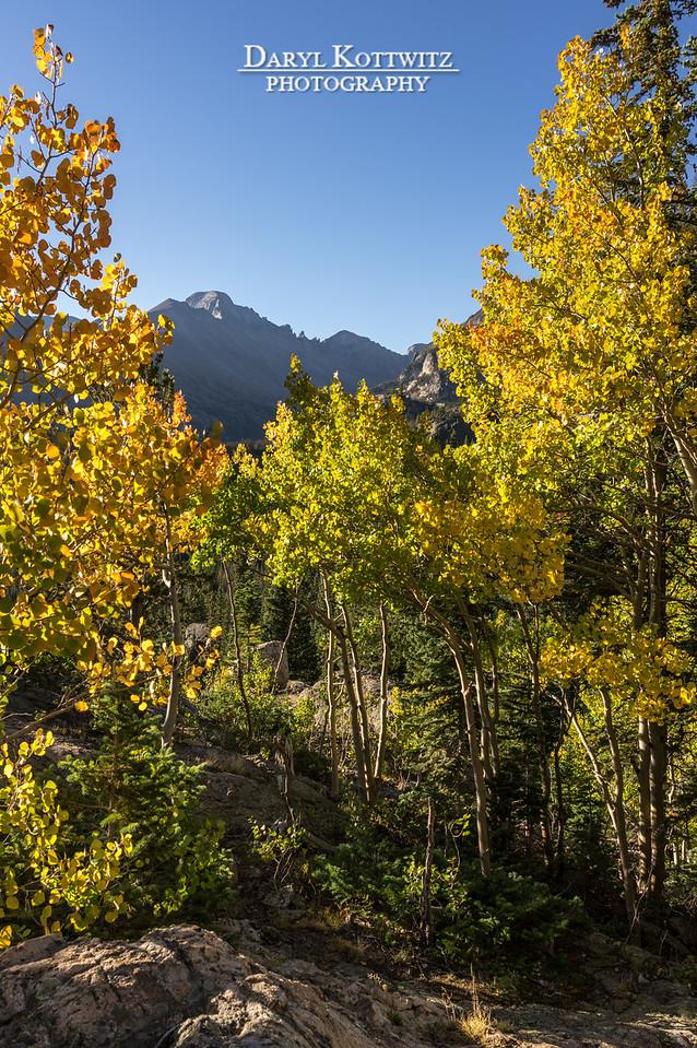Longs Peak Framed by Fall