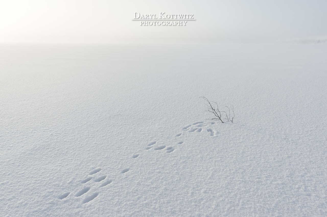 Squirrel Tracks - There and Back Again