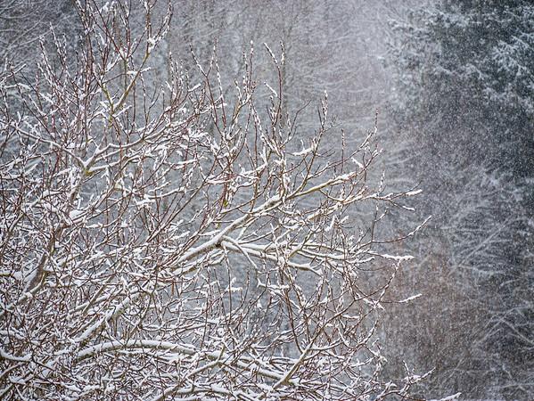 Snowy day at home | Augsburg, Bayern, Deutschland