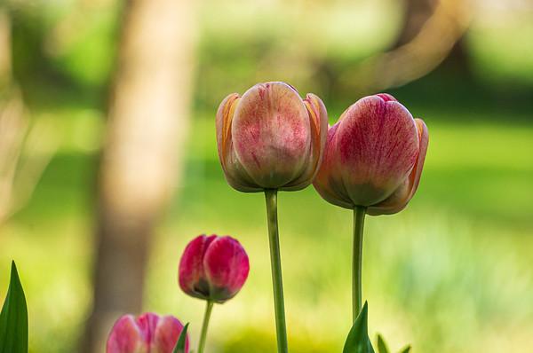 Our landlady's flowers [Augsburg, Bayern, Deutschland]