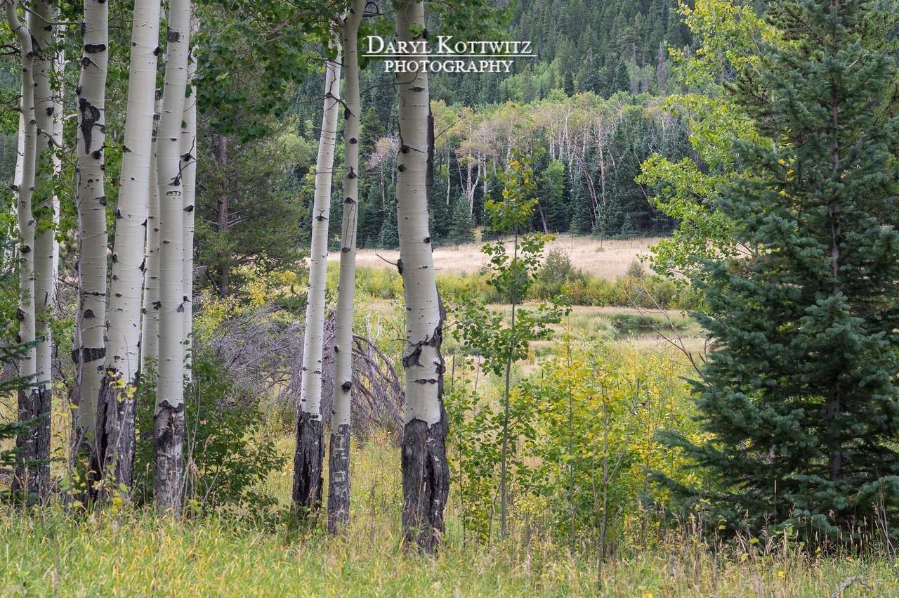 Meadow of Peace