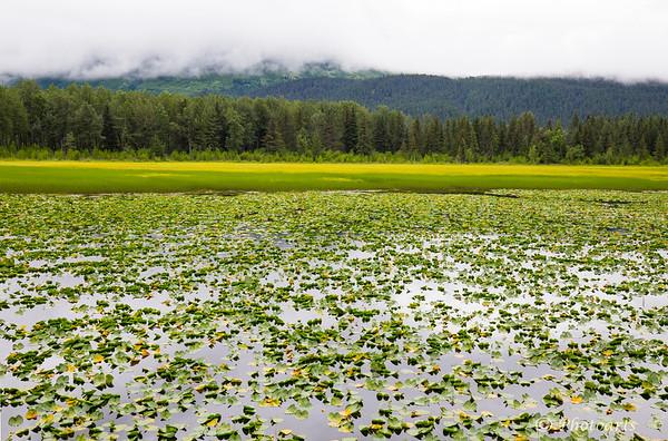 Alaska Lilly Lakes
