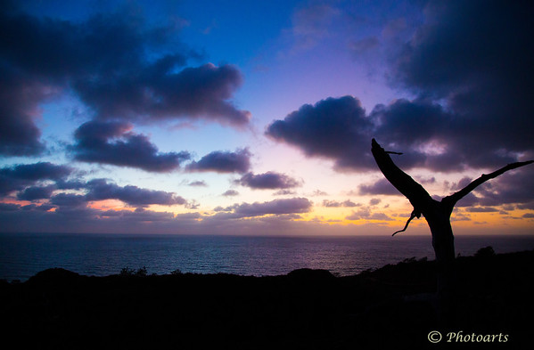 A lone tree now long gone stands witness to array of colors that came to life at dusk overlooking the Pacific ocean from the heights of Torrey Pines Sate Park north of SanDiego CA.<br /> #73101706<br /> <br /> © Payam Nashery - Photoarts