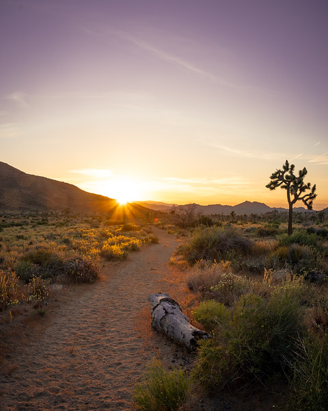 Quail springs trail at sunset. It's starting to get hot enough in the dessert that day hikes aren't always the most fun, but during sunset the temperature drops rapidly making everything pleasently warm with a bit of a breeze. Especially in Joshua tree it's becoming time for night hiking<br /> Camera: Sony a7 iii<br /> Shutter Speed: 1/60<br /> Aperture: f/8<br /> ISO: 100<br /> .<br /> .<br /> .<br /> .<br /> .<br /> .<br /> .<br /> .<br /> .<br /> .<br /> #landscape #landscapephotomag #landscape_capture #photography #anseladams #AnselWouldBeProud #joshuatreenps #adventurelifestyle #joshuatree #adventurephotography #travel #exploretheworld #hiking #exploreamerica #overland #goexplore #optoutside #photography #newgear #sonya7iii #climbing #vanlifexplorers #sunset #joshuatreenationalpark #travelphotography #explorecalifornia #rooftoptentliving #sonyalphasclub