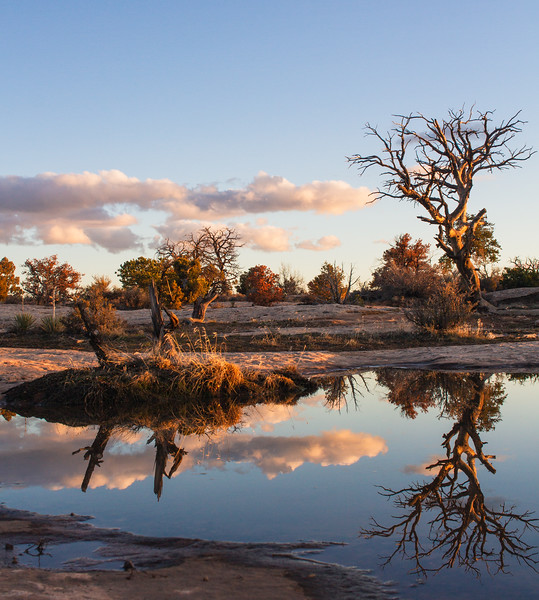 From two nights ago, small pools and puddles form on large flat rocks when it rains in the desert. Sunset was perfect to create mirror like surfaces reflecting the sky and surrounding vegetation.<br /> Camera: Canon 7D<br /> Shutter Speed: 1/100th<br /> Aperture: f/9.0<br /> ISO: 100<br /> .<br /> .<br /> .<br /> .<br /> .<br /> .<br /> .<br /> .<br /> .<br /> #mirror #landscape #sunset #nature #landscapephotography #goldenhour #puddle #desert #archesnationalpark #canyonlandsnationalpark #blm #mycanonstory #canonphotography #dirtbagging #boondocking #24mm #naturephotography #nature #nationalgeographic