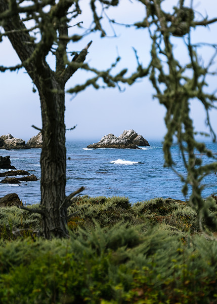 Rocky outcropping framed by a tree covered in what I though of as Spanish moss out in Point Lobos, but was to find out it's actually Lace Lichen known by a common name of old man's beard.<br /> <br /> Camera: Sony a7iii<br /> Shutter Speed: 1/6400th <br /> Aperture: f/2.8<br /> ISO: 400<br /> .<br /> .<br /> .<br /> .<br /> .<br /> .<br /> .<br /> .<br /> .<br /> .<br /> .<br /> .<br /> #ocean #landscape #photography #bigsur #sonyalpha #sunset #landscapephotography #vanlifexplorers #overland #goexplore #hiking #conservation #centralcoast #pacificcoasthighway #photography #bigsur #pointlobos #centralcalicoast #monterey #70to200mm #depthoffield #AnselWouldBeProud