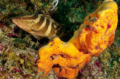 Aquacat 2012 Reef Scenes