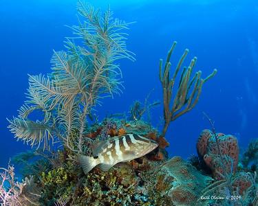 Recent Dive Trips