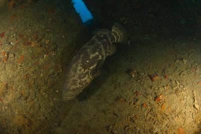 Jupiter Dive Center 09-11-09