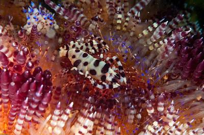 Underwater Cornucopia