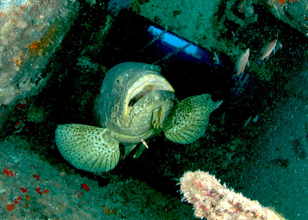 Marine Life Galleries