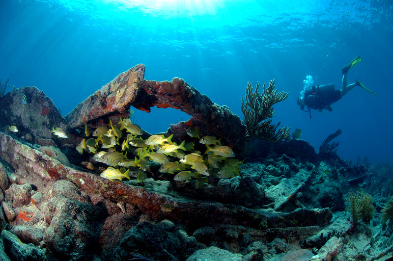 Reef & Wreck - Biscayne