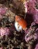 Snail ID needed