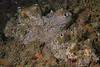 Gray moon sponge<br /> Garden Spot, Palos Verdes, California