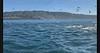 Sea gulls, pelicans, sea lions and dolphins feeding on a bait ball<br /> Palos Verdes, Los Angeles County, California