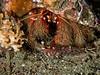 Crustacean buddies