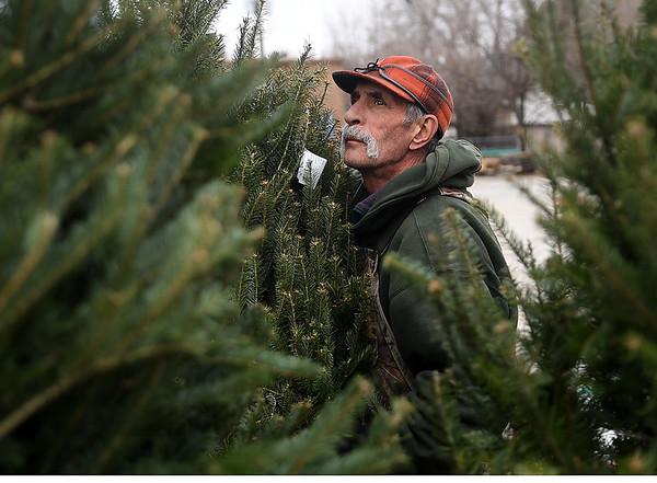 Premium Christmas Trees