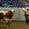 Longhorn Championships