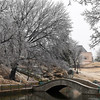 Ice covered treesat Government Springs Park Sunday January 15, 2017. (Billy Hefton / Enid News & Eagle)