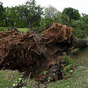 Uprooted trees on the 13th fairway at Oakwood Country Club Wednesday May 3, 2017. (Billy Hefton / Enid News & Eagle)