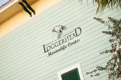 Loggerhead_001