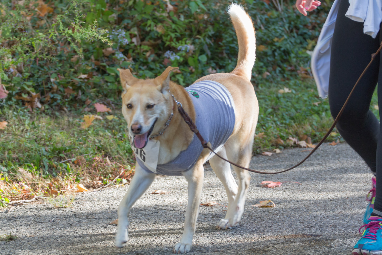2015Pawjoggers-7113