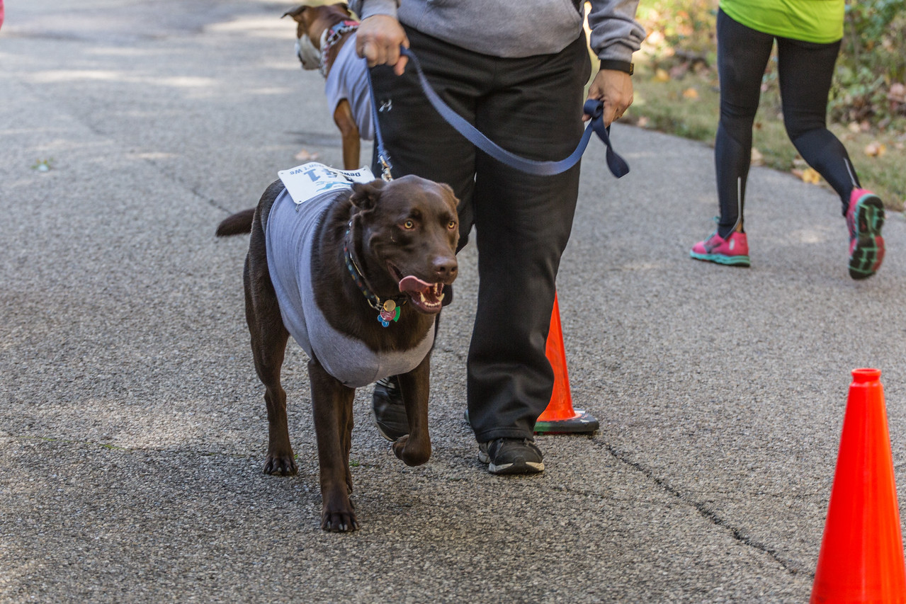 2015Pawjoggers-7346