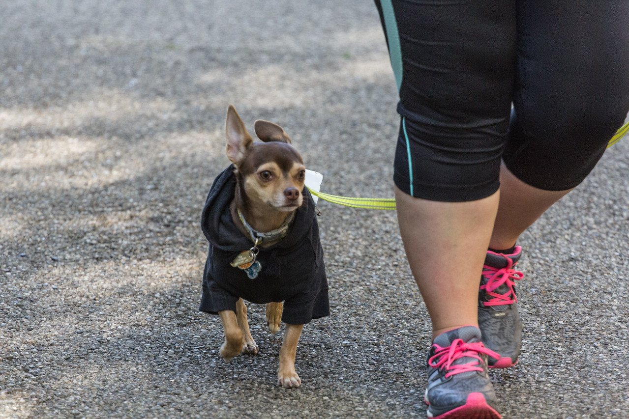 2015Pawjoggers-7553