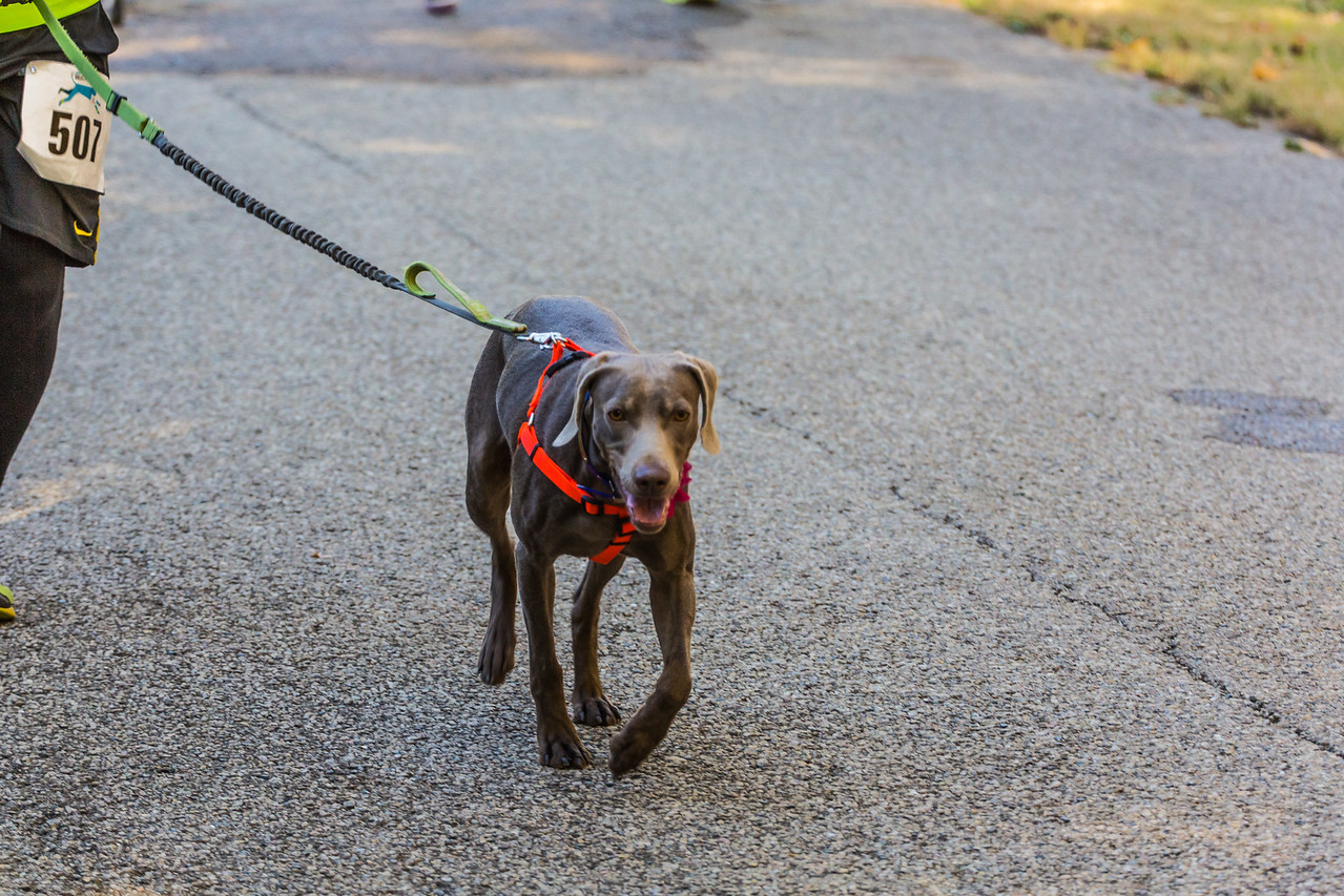 2015Pawjoggers-6738