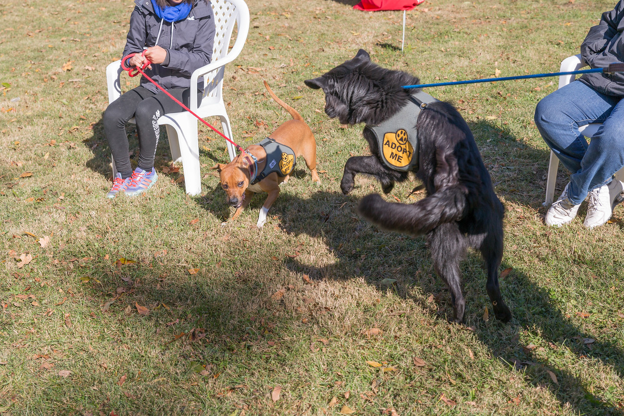 2015Pawjoggers-7923