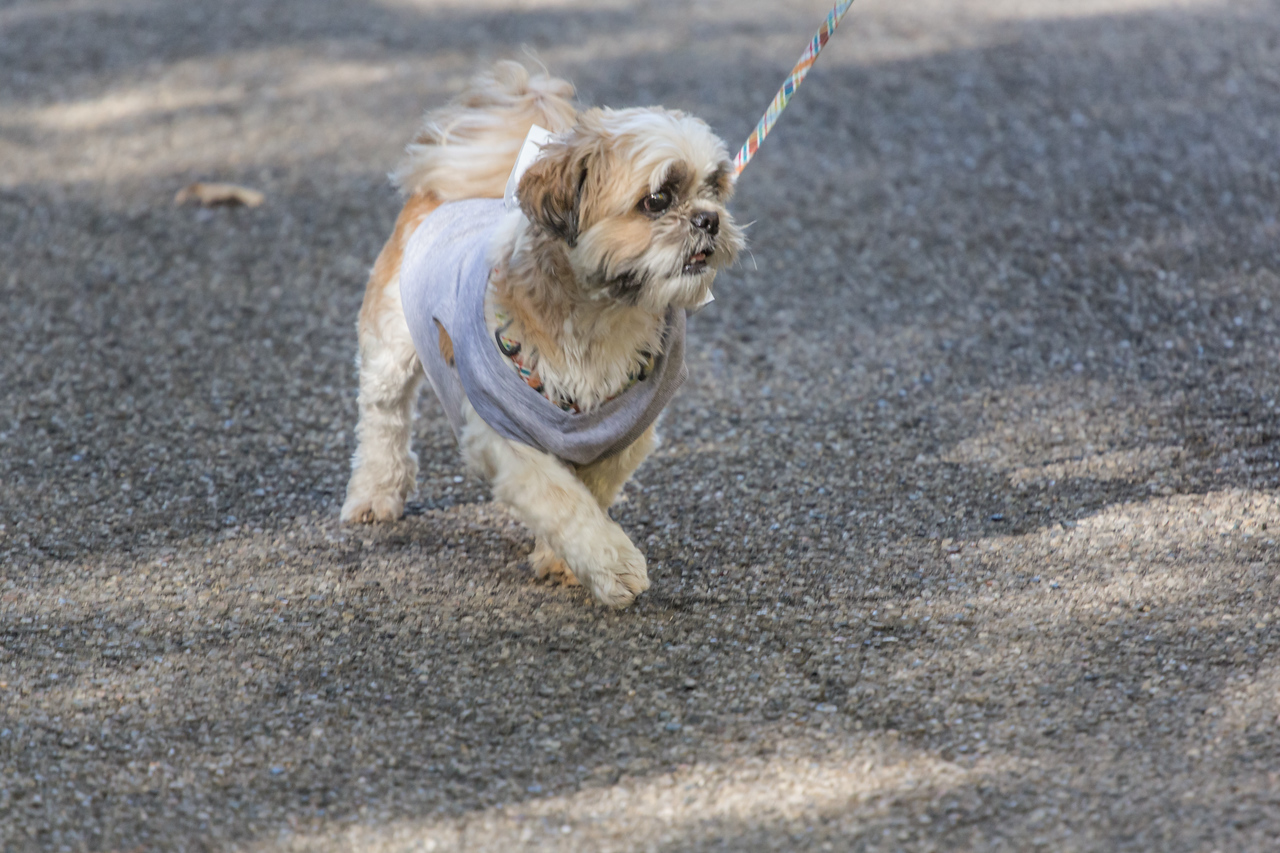 2015Pawjoggers-7768