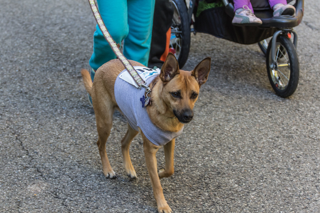 2015Pawjoggers-7780