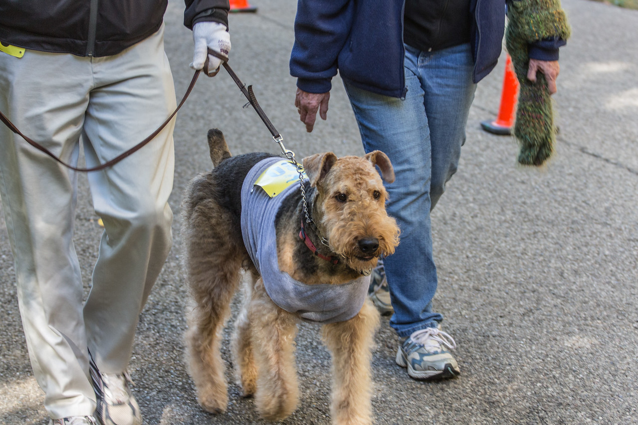 2015Pawjoggers-7436