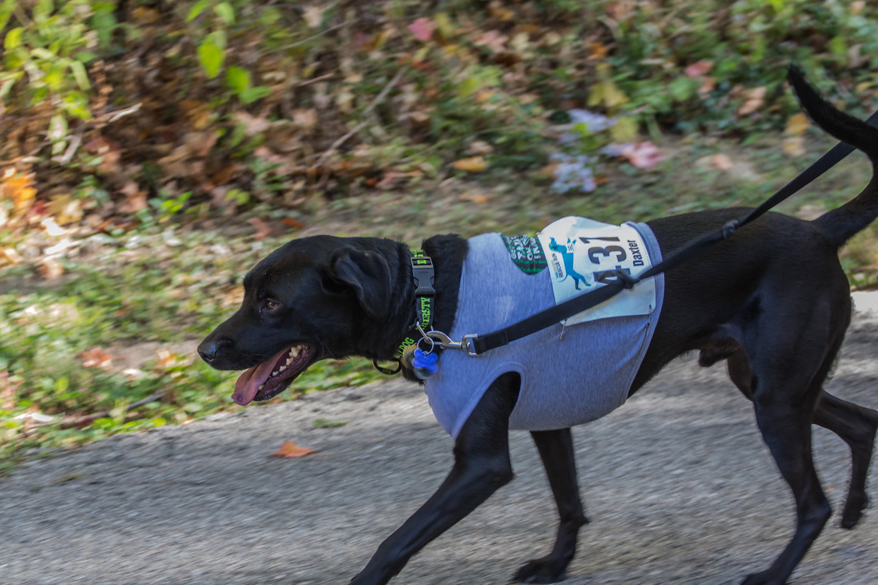 2015Pawjoggers-6937
