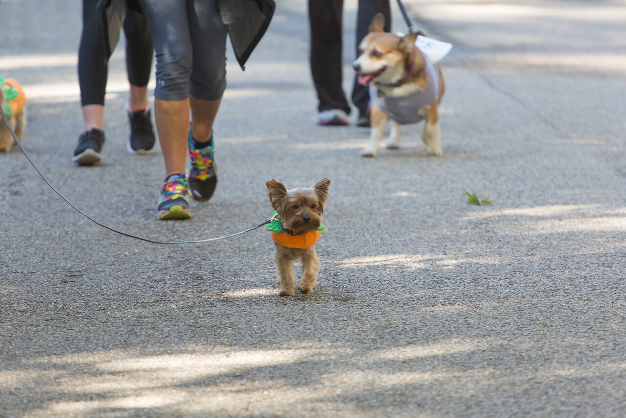 2015Pawjoggers-7722