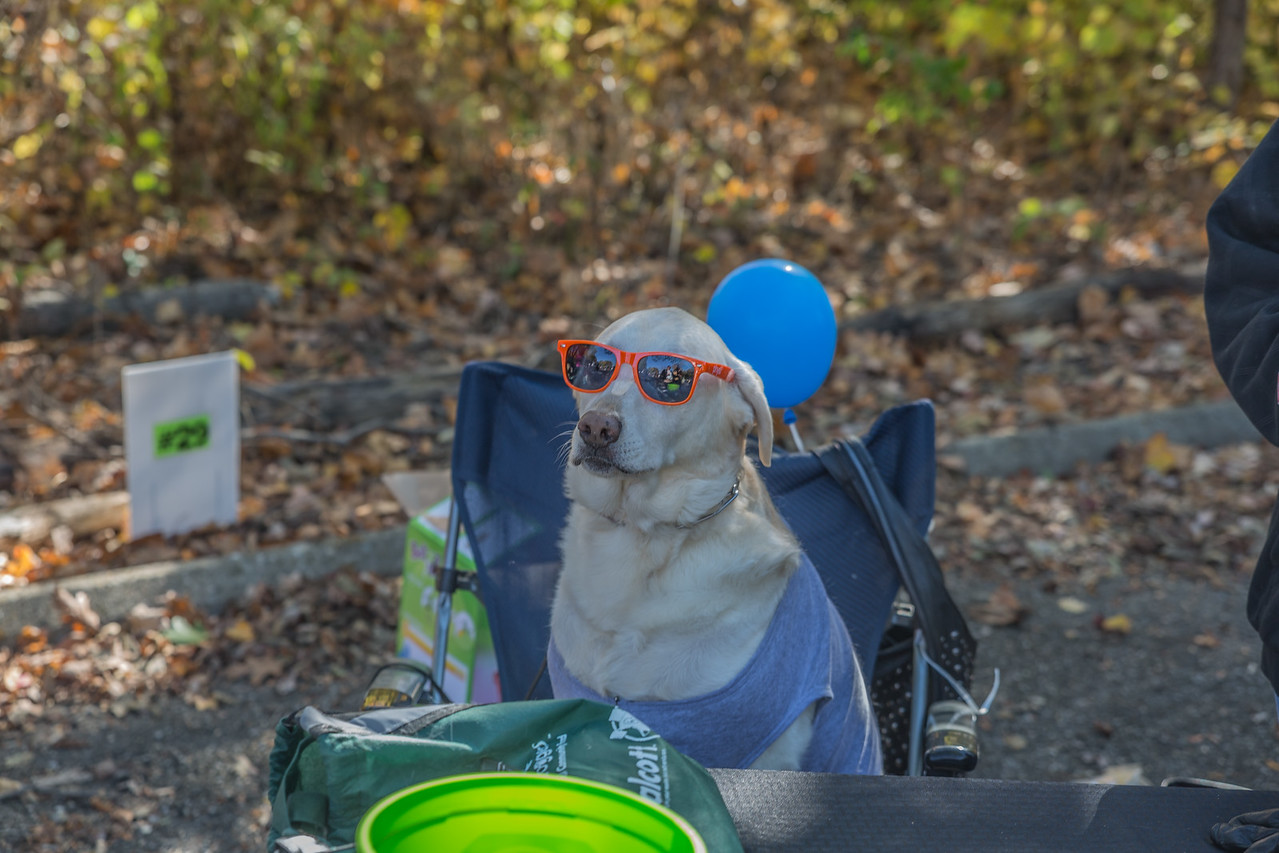 2015Pawjoggers-8053