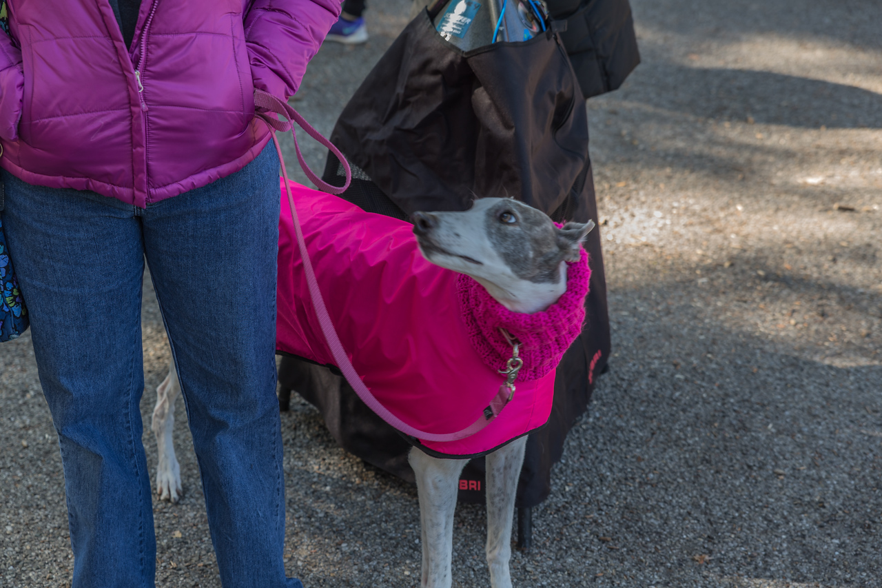 2015Pawjoggers-8021