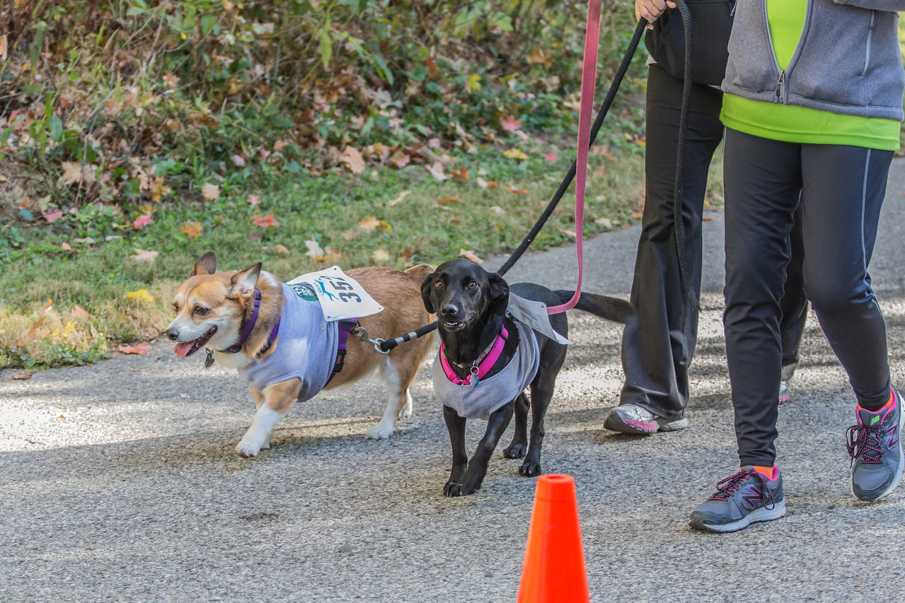 2015Pawjoggers-7754