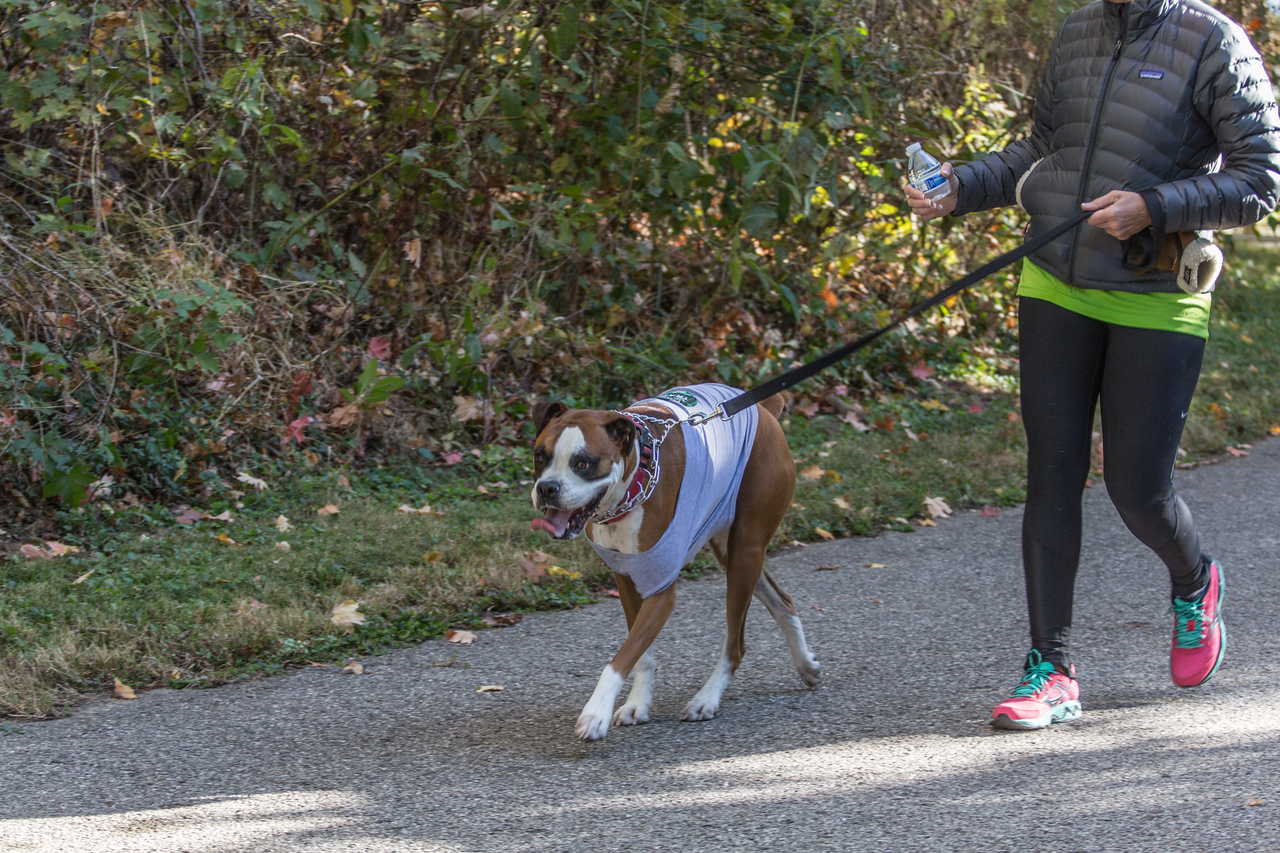 2015Pawjoggers-7331