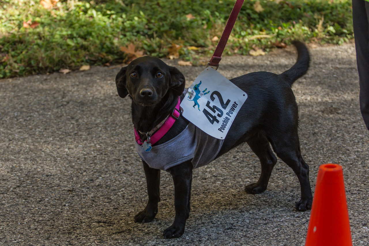 2015Pawjoggers-7760