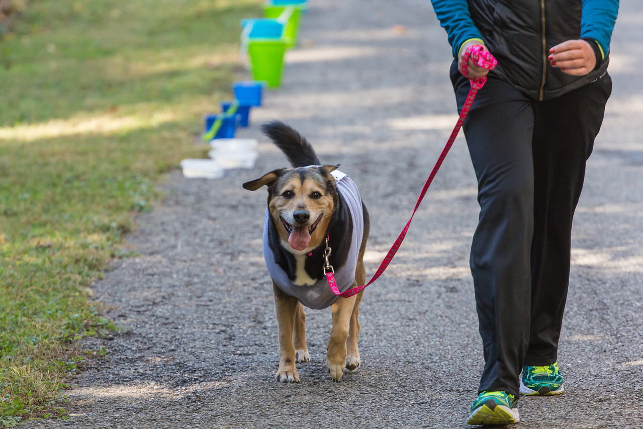2015Pawjoggers-7157