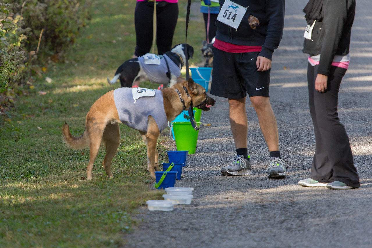 2015Pawjoggers-7266