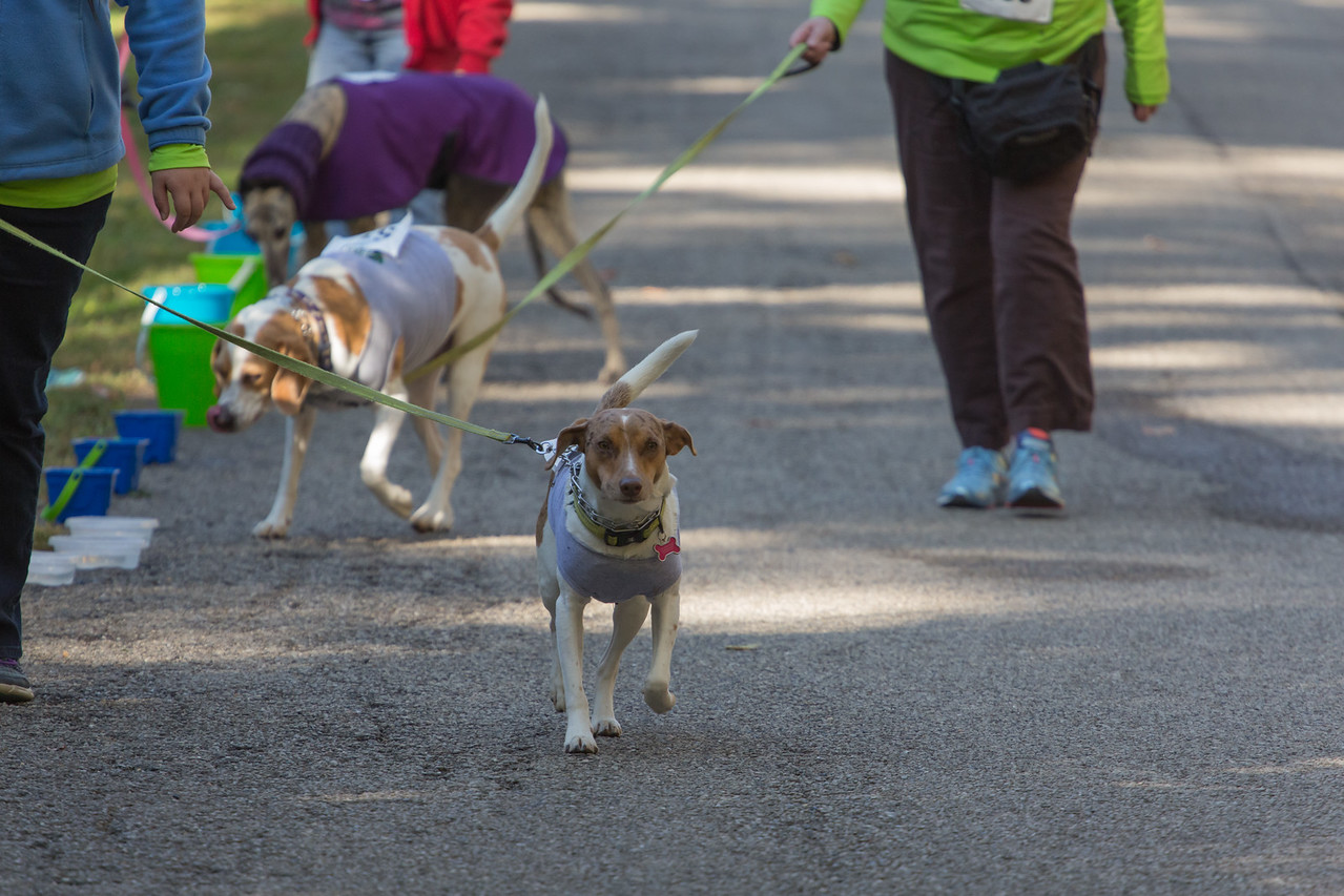 2015Pawjoggers-7811